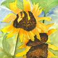 3 Sunflowers by Mary Lomma