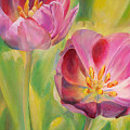 Tulipes by Muriel Dolemieux