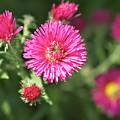 3d Flower by Robert Joseph