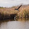 Turkey Creek In Palm Bay Florida by Allan  Hughes
