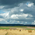 Hay Bales In Harvested Corn Field by Sami Sarkis