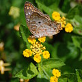 5 Yellow Flowers And A Buttefly by Rob Hans
