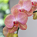 Orchids by LS Photography