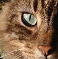 Cat Portrait by Valia Bradshaw