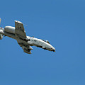 A-10 Warthog Diving by Murray Bloom