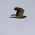 A Hawk Near The Charles M. Russell by Joel Sartore