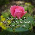A Hot Summer Day by Elliptical Art