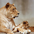 A Lioness And Cub by Gary Adkins