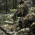 A Marine Sniper Team Wearing Camouflage by Stocktrek Images