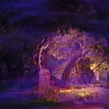 A Night Of Weeping In The Garden Gethsemane Israel 2008 by Anastasia Savage Ealy