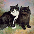 A Pair Of Pussy Cats by Lilian Cheviot