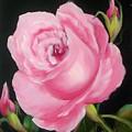 A Pink Rose by Joni McPherson