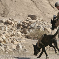 A Soldier And His Dog Search An Area by Stocktrek Images
