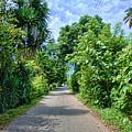 A Street Between Trees by Galeria Trompiz