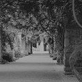 A Stroll Under The Vines Bw by Lynnette Johns