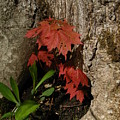 A Tree Hug by Donica Abbinett