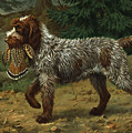 A Wire-haired Pointing Griffon Holds by Walter A. Weber
