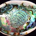Abalone Seashell by Mary Deal
