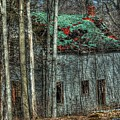 Abandoned In The Woods. by Rick Couper