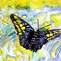 Abstract Butterfly by Derek Mccrea