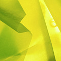 Abstract Yellow And Green by Stefania Levi