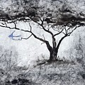 Acasia Tree by Ilona Petzer