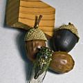 Acrons And Cicada by Douglas Barnett