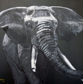 African Elephant by Richard Le Page
