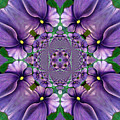 African Violet Wave by Barbara Griffin