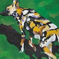African Wild Dog by Caroline Davis