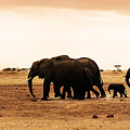 African Wild Elephants by Anna Om