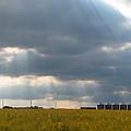 Alberta Wheat Field by Stuart Turnbull