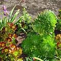 Alcatraz Cactus Garden by Terry Burgess