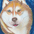 Alek The Siberian Husky by Ania M Milo