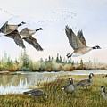 Aleutian Geese At Lake Earl by Lynne Parker