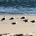 All My Gulls In A Row by Ellen Lerner ODonnell