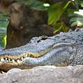 Alligator 1 by Jouko Lehto
