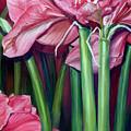 Amaryllis In Bloom by Rita-Anne Piquet