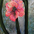 Amaryllis Of Peace by Emily Michaud