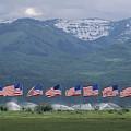 American Flags Honoring Veterans by James P. Blair