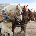American Work Horse by Patty Vicknair