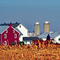 Amish Farm by Thomas R Fletcher