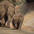 An Indian Rhinoceros And Her Baby by Michael Nichols