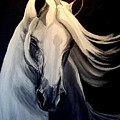 Andalusian Stallion by Glenda Smith