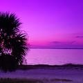 Andtthen It Was Purple by Florene Welebny