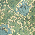 Anemone Design by William Morris