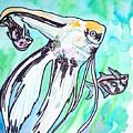 Angel Fish And Hatchet Tetras by Jenn Cunningham
