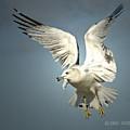 Angel Wings by Don Durfee