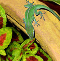 Anole Having A Drink by Lucyna A M Green