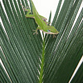 Anole With Palm - Assertive by Lucyna A M Green